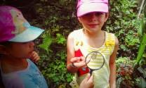 observano mariposas